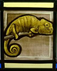 camaleon cuadrado