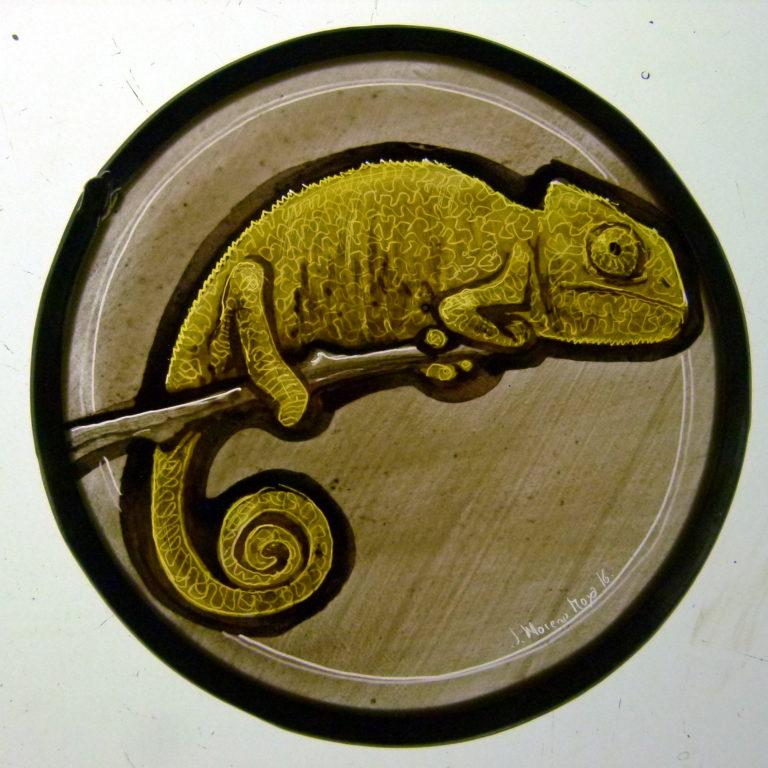 camaleonredondo1